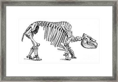 Toxodon, Cenozoic Mammal Framed Print
