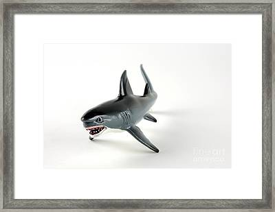 Toy Shark Framed Print by Photo Researchers, Inc.