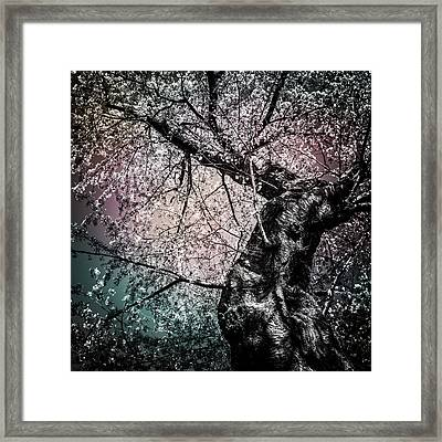 Tracing The Constellations Framed Print by Anthony Rego