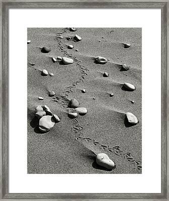Tracks And Rocks Framed Print by Brady D Hebert