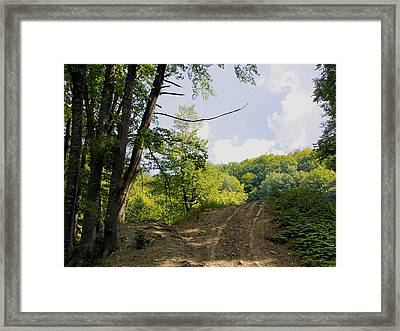 Tracks In The Forest Framed Print
