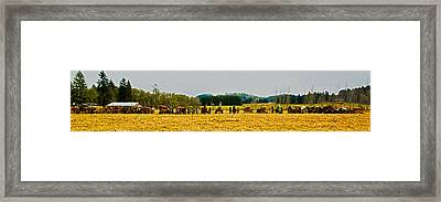 Tractors Ready Framed Print by Dale Stillman