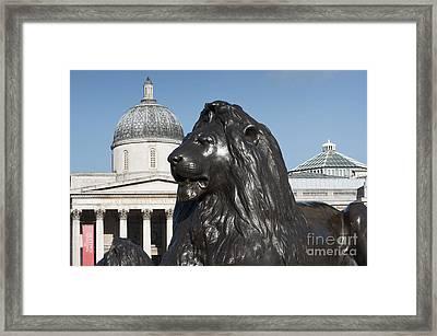 Trafalgar Square Lion Framed Print by Andrew  Michael