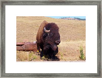 Traffic Check Framed Print by Sharon Harrison