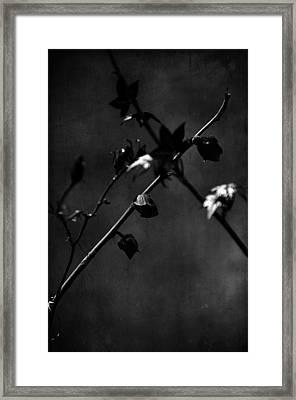 Trances And Dreams Framed Print by Rebecca Sherman