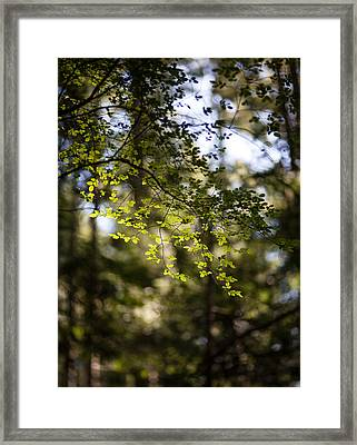 Tranquil Forest Framed Print by Mike Reid
