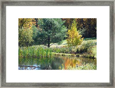 Framed Print featuring the photograph Tranquil by John Schneider