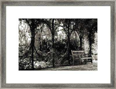 Tranquil Leaf Covered Walkway In Black And White Framed Print