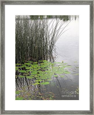 Tranquil Lillypads Of Spring Framed Print by Michelle Bergersen