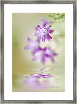 Tranquil Spring Framed Print by Jacky Parker