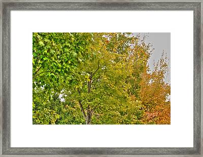 Framed Print featuring the photograph Transition Of Autumn Color by Michael Frank Jr