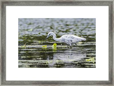 Transitioning Framed Print