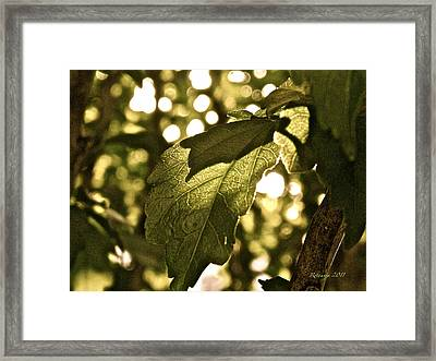 Transparent Glow II Framed Print by Rotaunja