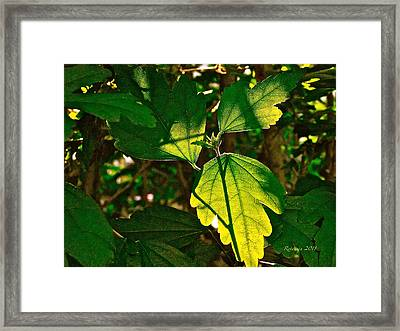 Transparent Glow IIi Framed Print by Rotaunja