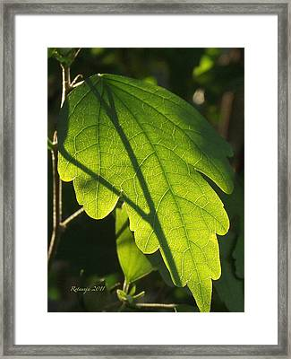Transparent Glow Iv Framed Print by Rotaunja
