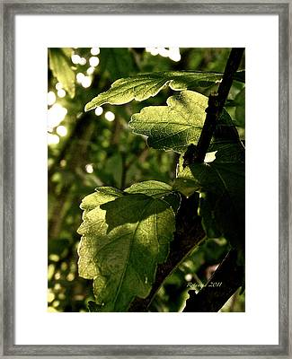 Transparent Glow Framed Print by Rotaunja
