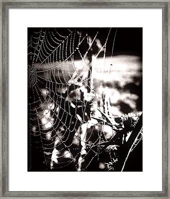 Trap - Falle Framed Print by Mimulux patricia no No
