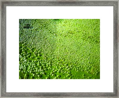 Trapped Air Bubbles Framed Print by Catherine Natalia  Roche