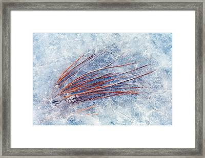 Trapped In Winter Framed Print by Mike  Dawson