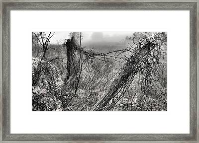 Trapped Framed Print by JC Findley