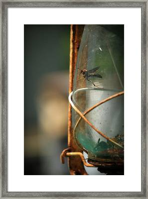 Trapped Framed Print by Mandy Shupp