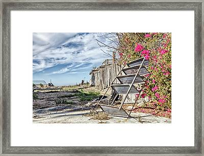 Trash With Bougainvillea Framed Print