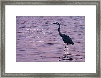 Treading Alone   Great Blue Heron  Framed Print by Jonathan Whichard