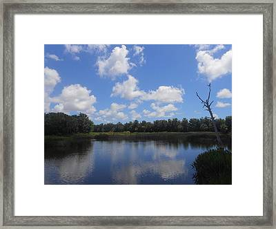 Treasures Along The Road Framed Print by Sheila Silverstein