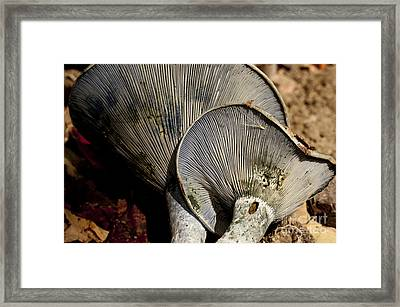 Treasures In The Woods Framed Print by Wilma  Birdwell