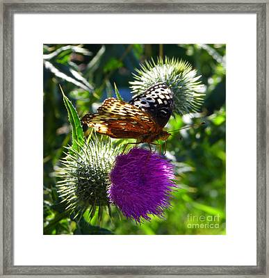 Treasures Of The Mace Y Verde Framed Print by KD Johnson