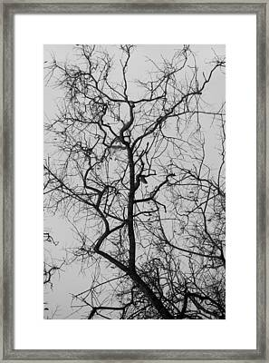 Tree Against A White Sky In The Early Morning Hours Framed Print by Gal Ashkenazi