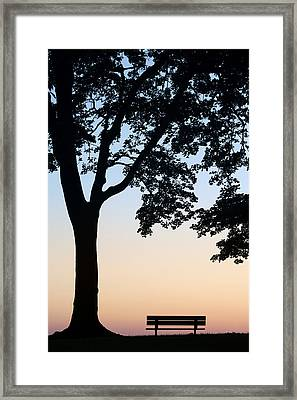 Tree And Bench Silhouette Framed Print by Darwin Wiggett