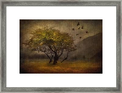 Tree And Birds Framed Print by Svetlana Sewell