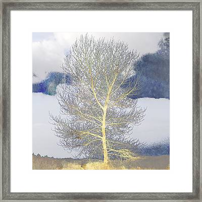 Tree And Clouds Framed Print by Carol Leigh