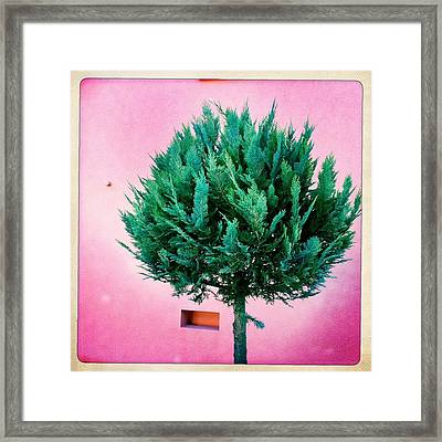Tree And Colorful Pink Wall Framed Print by Matthias Hauser