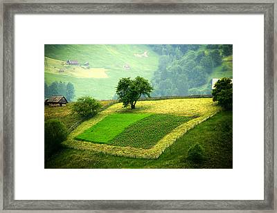 Tree And Field Framed Print