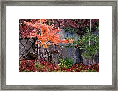 Tree And Rock Framed Print by Tom Singleton