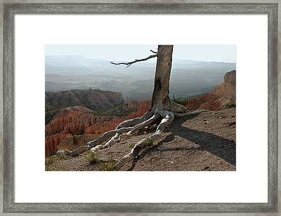 Tree And Roots In Bryce Canyon Framed Print by Randall Nyhof