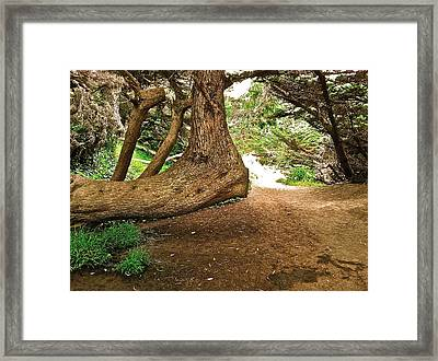 Framed Print featuring the photograph Tree And Trail by Bill Owen