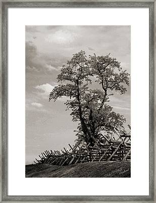 Tree At Bloody Lane Black And White Framed Print by Judi Quelland