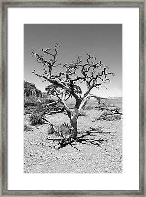 Tree At Cedar Ridge Bw Framed Print by Julie Niemela