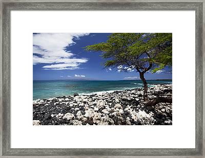 Tree At La Parouse Bay Framed Print by Jenna Szerlag