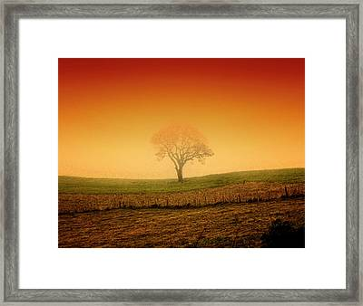 Tree At Sunset And Misty Framed Print by Antonello