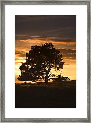 Tree At Sunset, North Yorkshire, England Framed Print by John Short