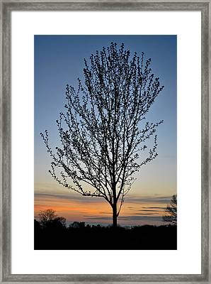 Tree At Sunset Framed Print