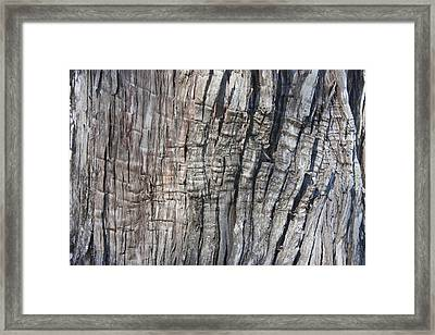 Framed Print featuring the photograph Tree Bark No. 1 Stress Lines by Lynn Palmer