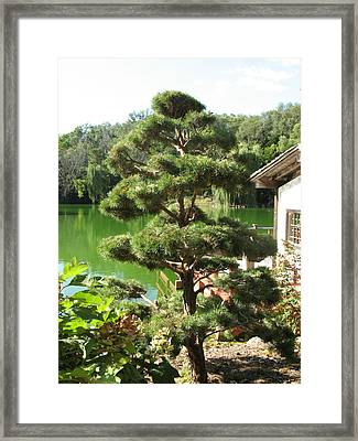 Tree Before Pond Framed Print by Kimberly Mackowski