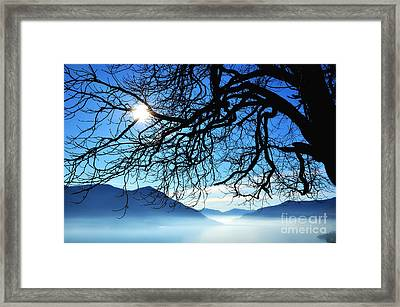 Tree Branches And Sun Framed Print