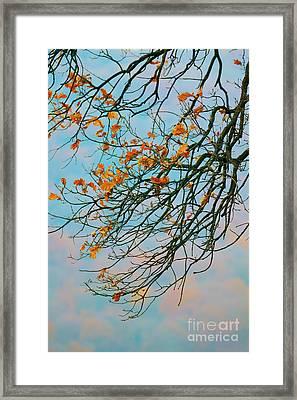 Tree Branches In Autumn Framed Print by Gabriela Insuratelu