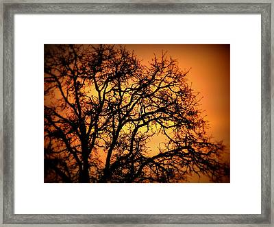 Tree Bursting With Setting Sun Framed Print by Cindy Wright